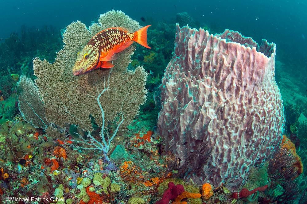 MPO_Coral_Reef_Florida69